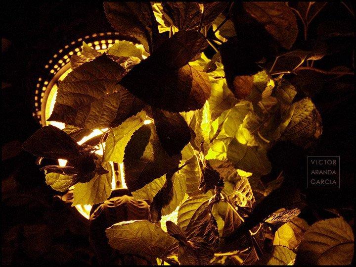 Fotografía de las hojas de un árbol de noche