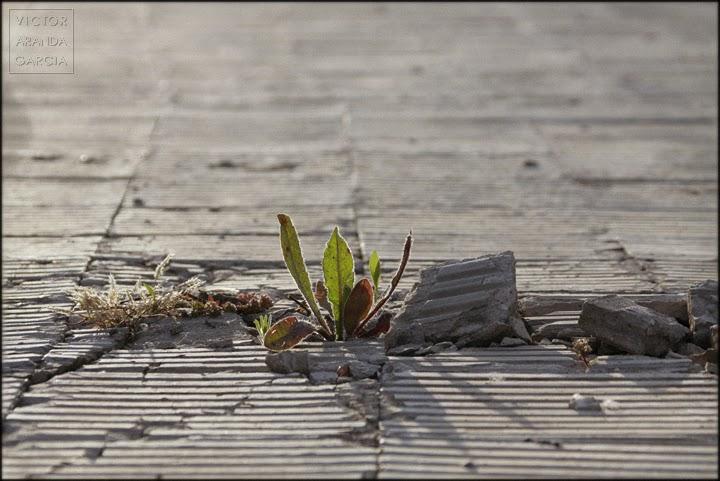 Fotografía de una planta creciendo entre baldosas rotas