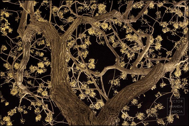 Fotografía de un árbol con semillas amarillas y el cielo oscuro de la noche de fondo