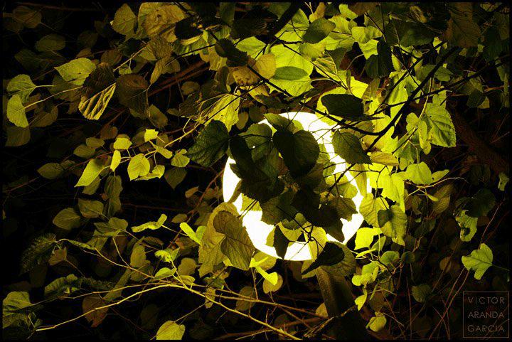 Fotografía de las hojas de un árbol iluminadas por una farola esférica de noche