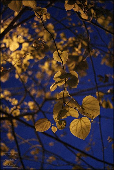 Fotografía de las hojas de un árbol iluminadas por una farola