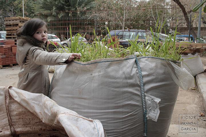 Fotografía de unas plantas que han crecido en un saco de escombros en la calle con una niña tomando una pequeña flor de entre ellas