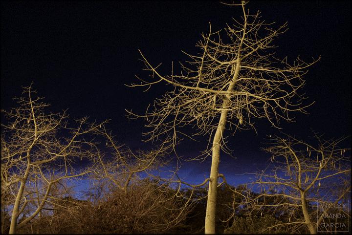Fotografía de varios árboles al amanecer con el cielo de fondo