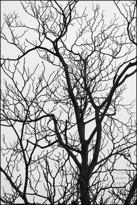 Fotografía de la estructura de ramas de un árbol en invierno