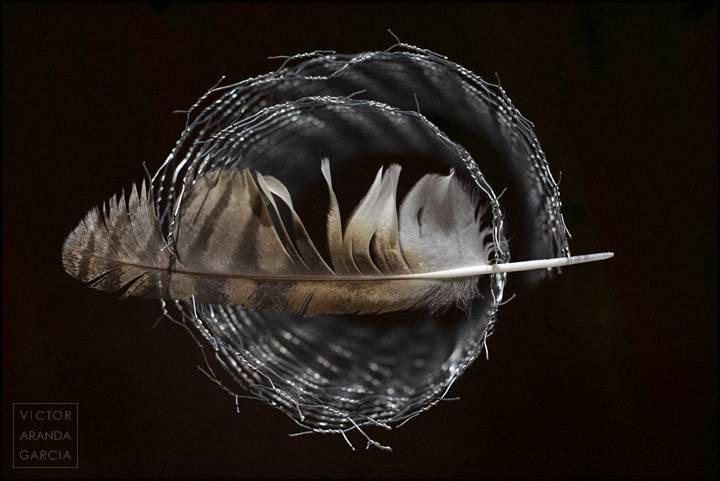 Fotografía de estudio de una pluma sobre una alambrada con fondo negro