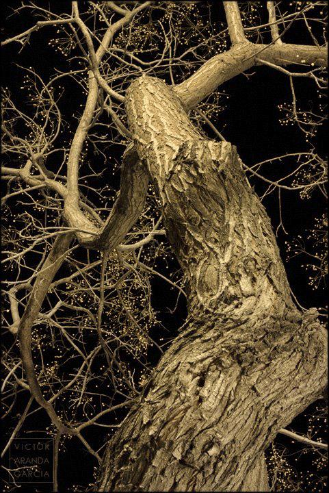 Fotografía de un árbol sin hojas de noche bajo la luz de las farolas