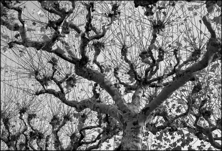 Fotografía de varios árboles en invierno