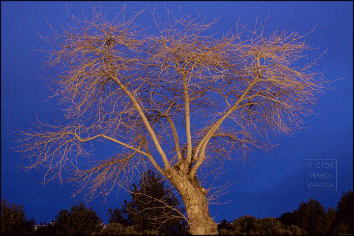 Fotografía de un árbol iluminado por la luz nocturna de la ciudad con el cielo de fondo