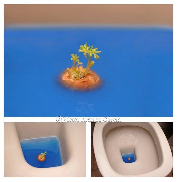 Composición de tres fotografías del extremo brotado de una zanahoria en el interior de un retrete con un líquido azul