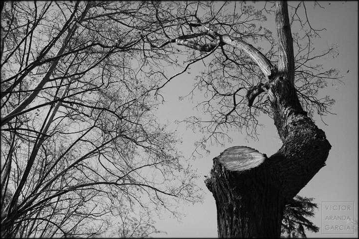 Fotografía con el tronco de un árbol en primer plano y otros árboles de fondo a la izquierda