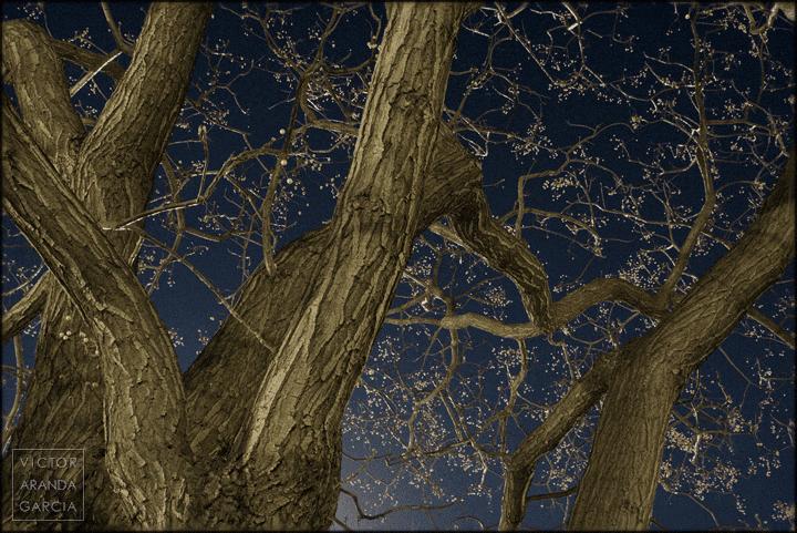 Fotografía de árboles en invierno iluminados por las luces de la ciudad