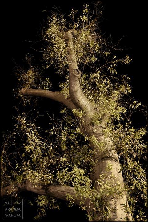 Fotografía de un eucalipto iluminado por las farolas con el cielo negro nocturno de fondo