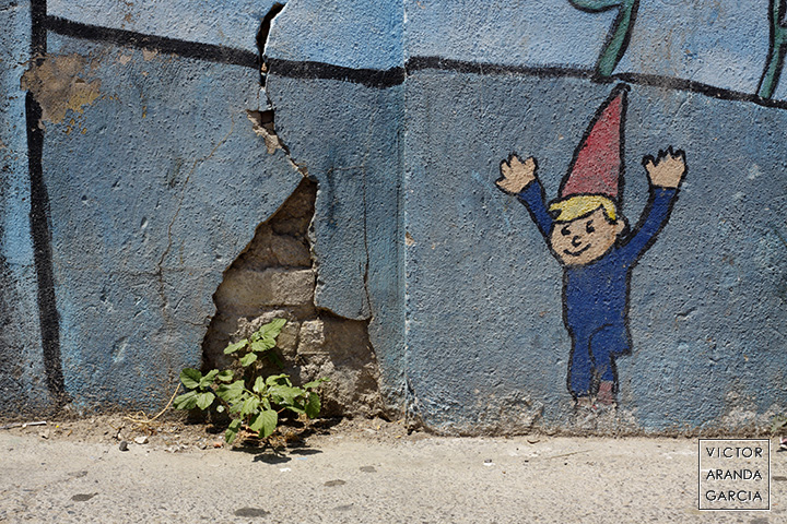 Fotografía de una planta que ha crecido en el roto de un muro pintado con un gnomo que parece celebrar la vida a su lado