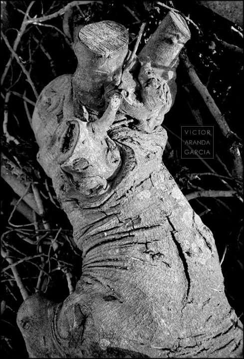 Fotografía del tronco cortado de un árbol