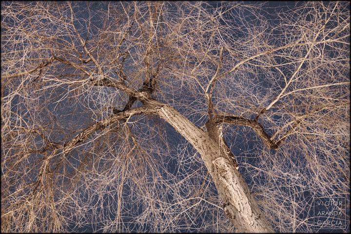 Fotografía de un árbol con las ramas desnudas bajo la luz de la ciudad de noche