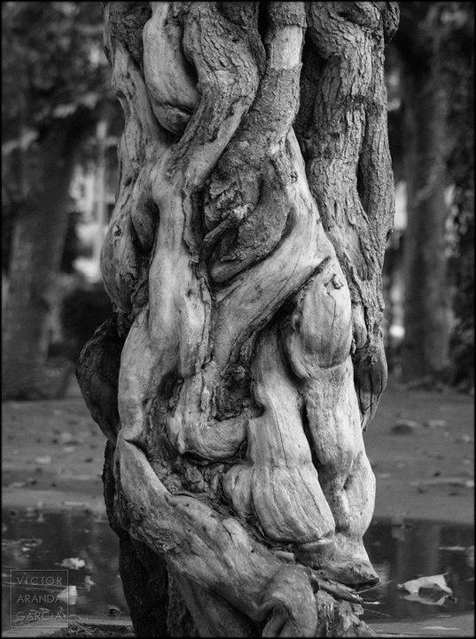 Fotografía del tronco nudoso de un árbol