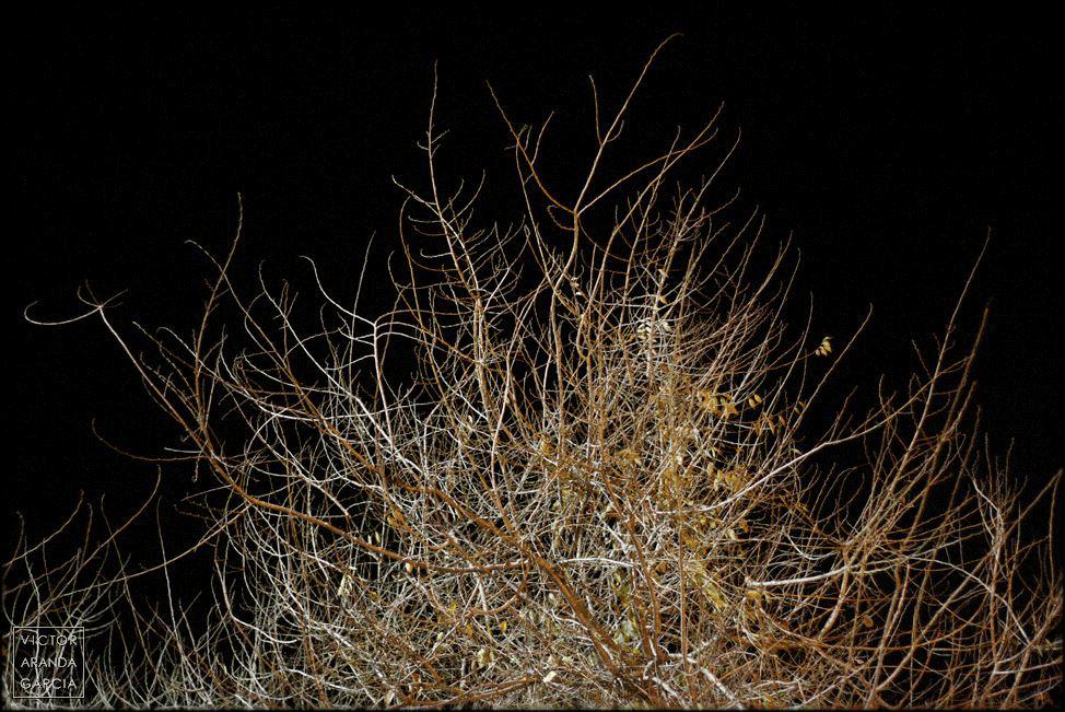 Fotografía de una maraña de ramas casi libres de hojas con un cielo sin luna de fondo