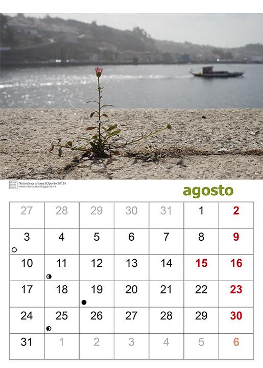 Página del calendario 2020 con una fotografía tomada en Oporto de una planta creciendo en el suelo delante del río Duero con un barco pasando