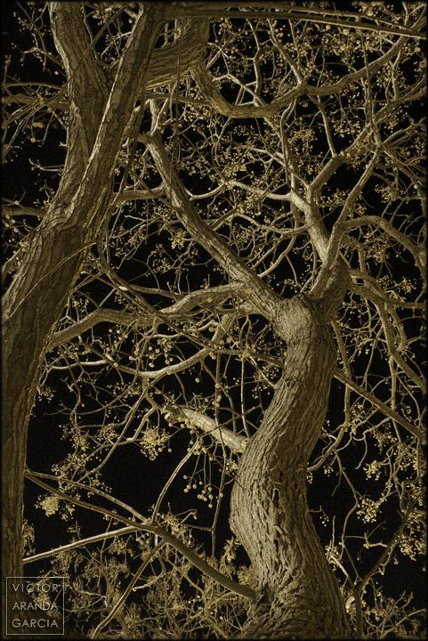 Fotografía de dos árboles iluminados por las farolas con el cielo nocturno de fondo
