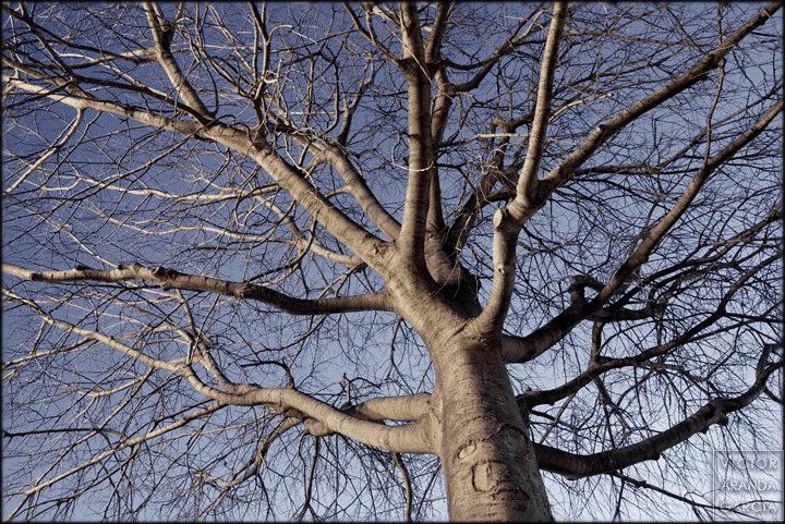 Fotografía de un árbol tomada al amanecer bajo la luz de la ciudad