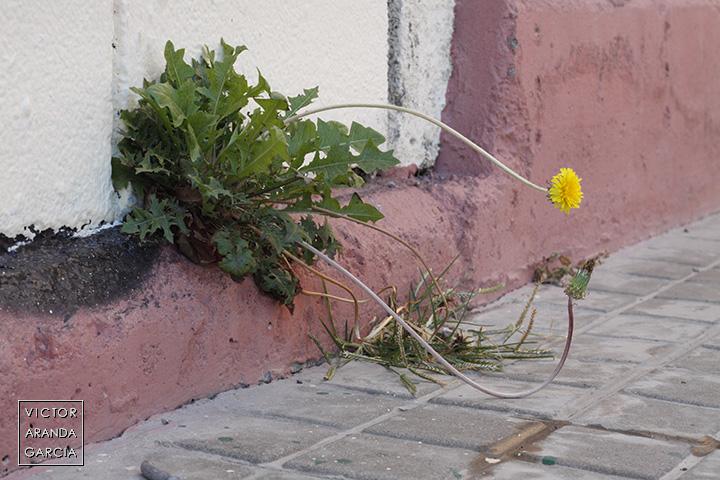 Fotografía de una flor nacida en la parte baja de una puerta en la ciudad de Valencia