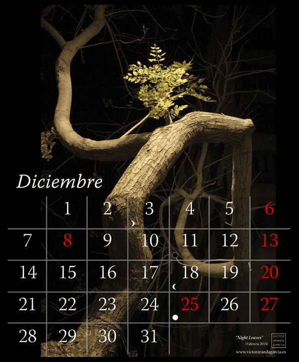 Imagen de una página del calendario con la foto de un árbol iluminado por una farola de fondo