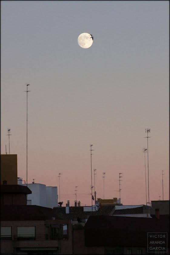 Fotografía de un ave volando sobre los tejados de una ciudad pasando delante de la luna llena al atardecer