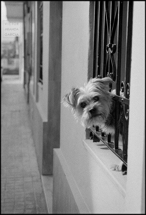 Fotografía de un perro asomado a la ventana enrejada de una casa