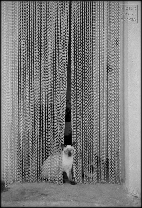 Fotografía de un gato en la puerta de una casa abriendo una cortinilla metálica