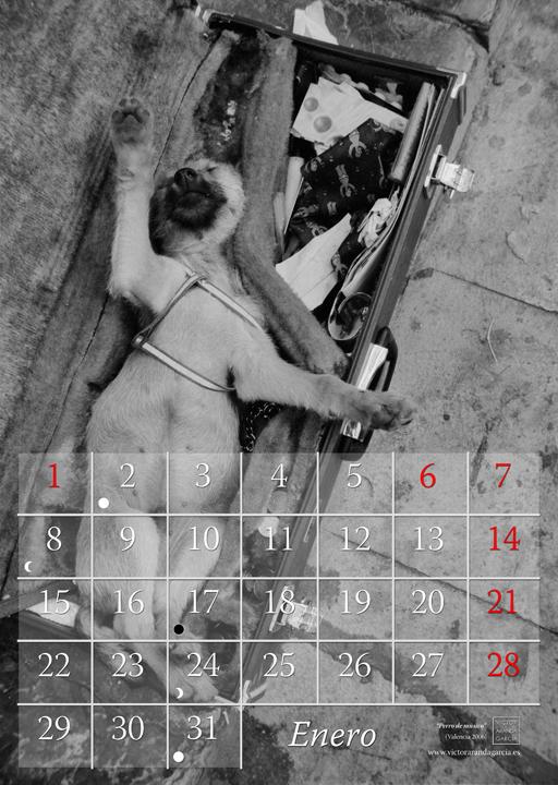 Página del calendario con la fotografía de un perro dormido en el estuche de un instrumento musical en la calle