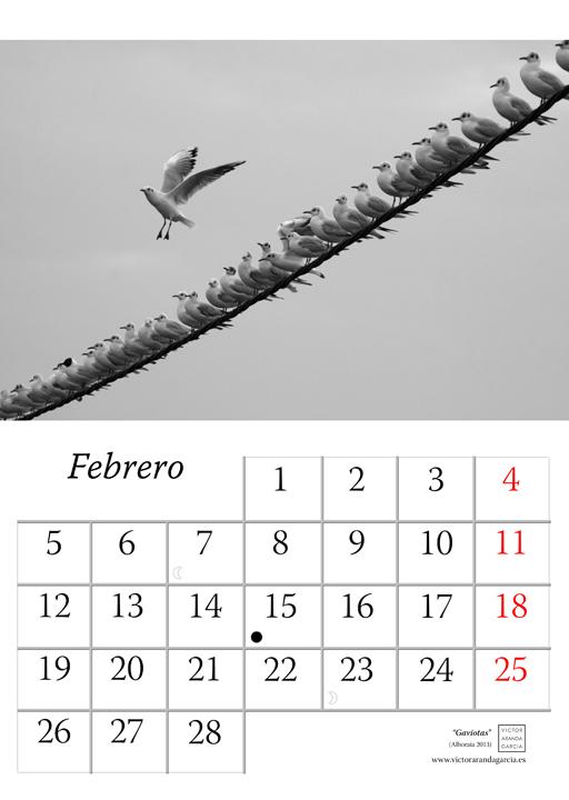 Página del calendario con una fotografía en la que se ve a decenas de gaviotas sobre un cable y una sola volando con las alas abiertas