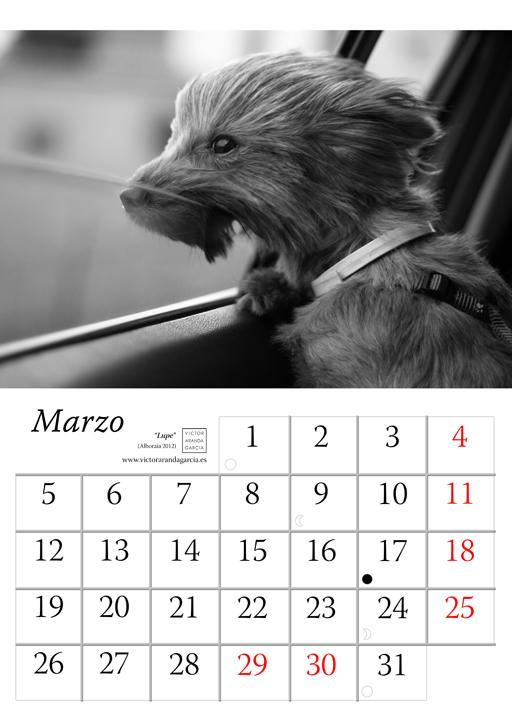 Página del calendario con una fotografía de un perro asomada a la ventanilla de un coche con el pelo al viento