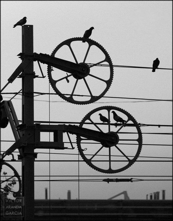 Fotografía de varias palomas pasando entre los cables y mecanismos del tendido del ferrocarril a contraluz