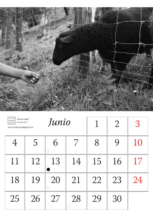 Página del calendario con la fotografía de una oveja negra comiendo de la mano de un niño a través de una alambrada