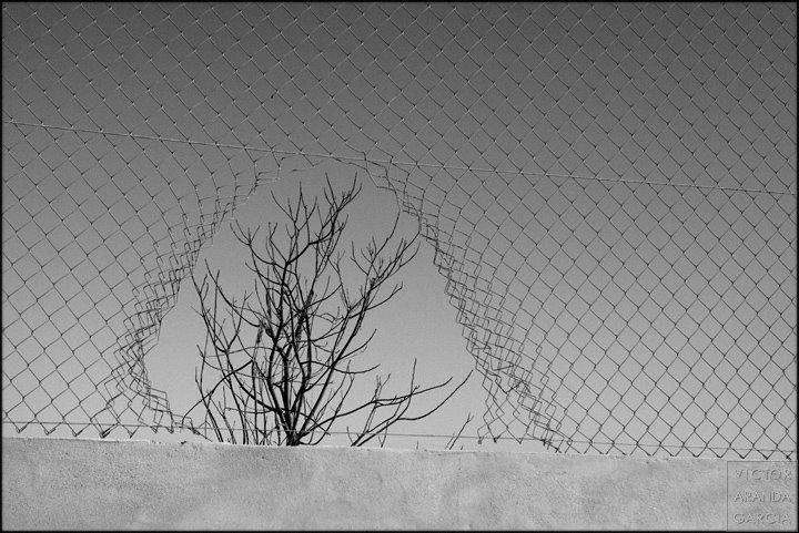 Fotografía de las ramas desnudas de un árbol vistas a través de un roto en una valla de la que parecen formar parte