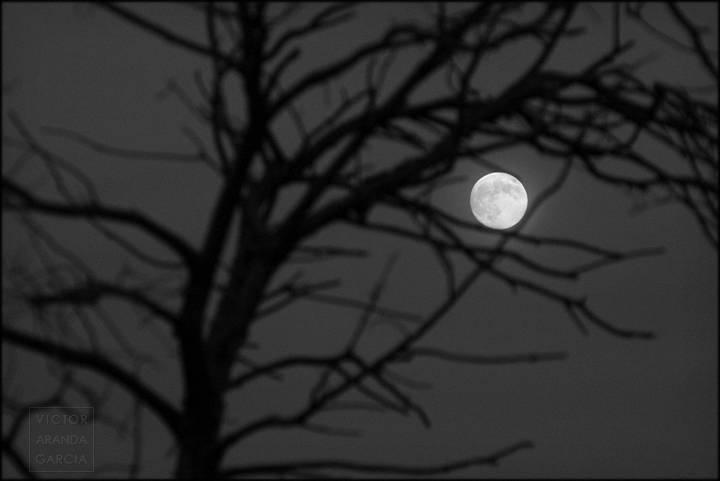 luna entre ramas en blanco y negro