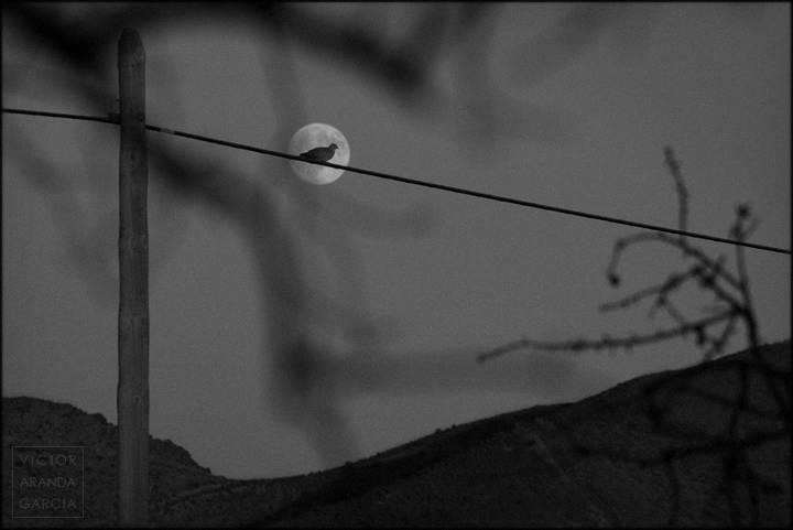 luna con tortola sobre cable
