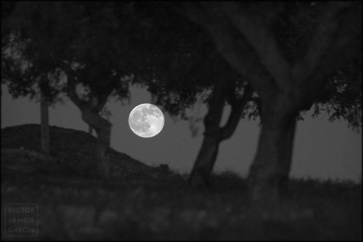 luna recien asomada entre arboles