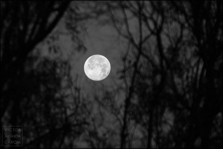 la luna vista entre naturaleza a contraluz