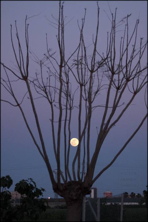 foto de la luna entre ramas