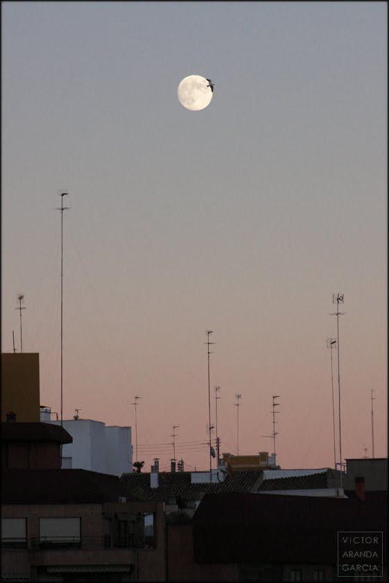 un ave pasando delante de la luna llena