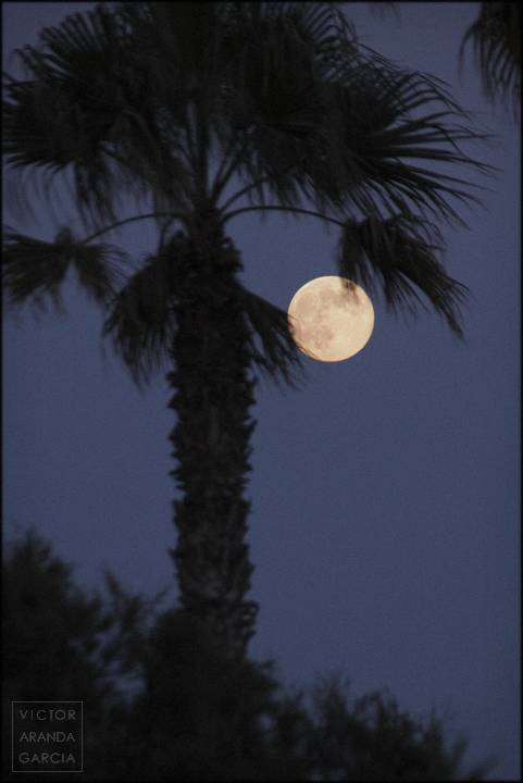 luna con palmera