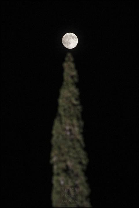 la luna sobre un cipres
