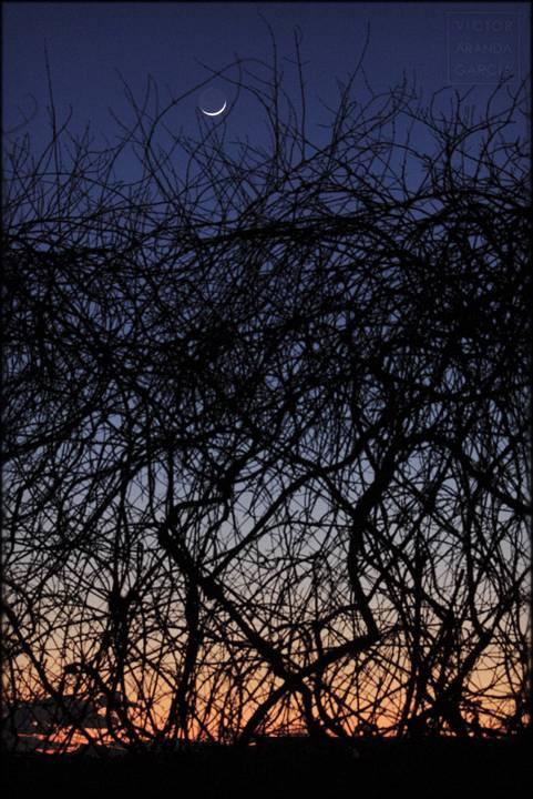 luna nueva entre ramas