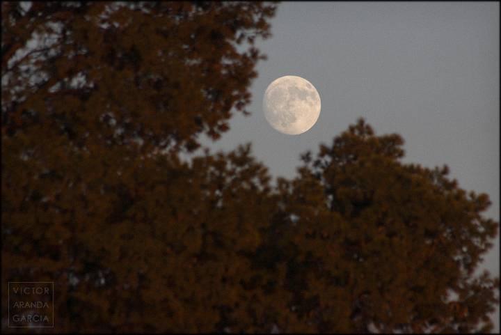 luna tras arbol iluminado con luz de atardecer
