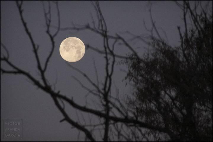 luna llena con ramas