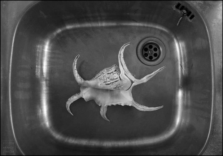 Fotografía de una concha en un fregadero