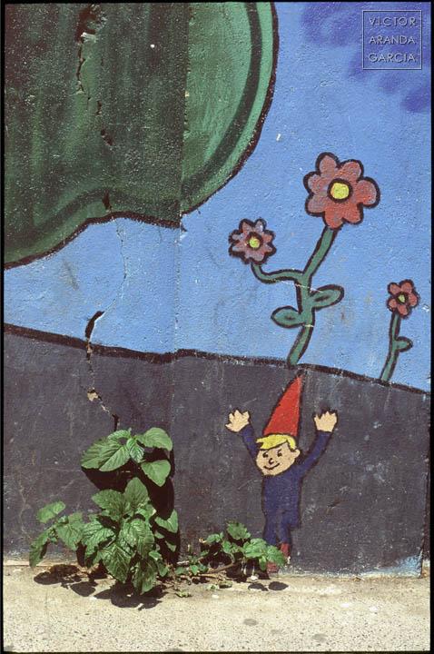 planta,brote