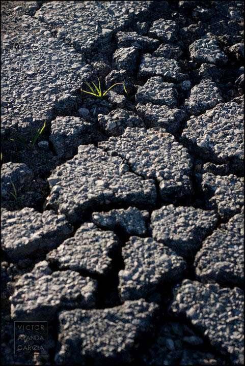 Fotografía de una hierba creciendo entre los pedazos del asfalto de una carretera roto