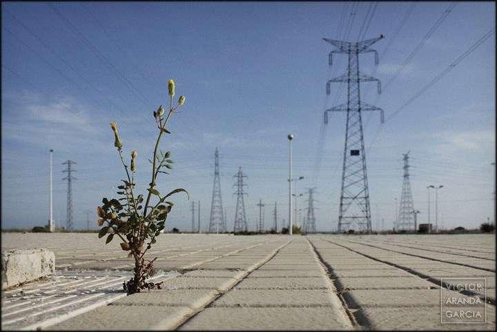 Fotografía de una planta creciendo entre baldosas con torres eléctricas al fondo